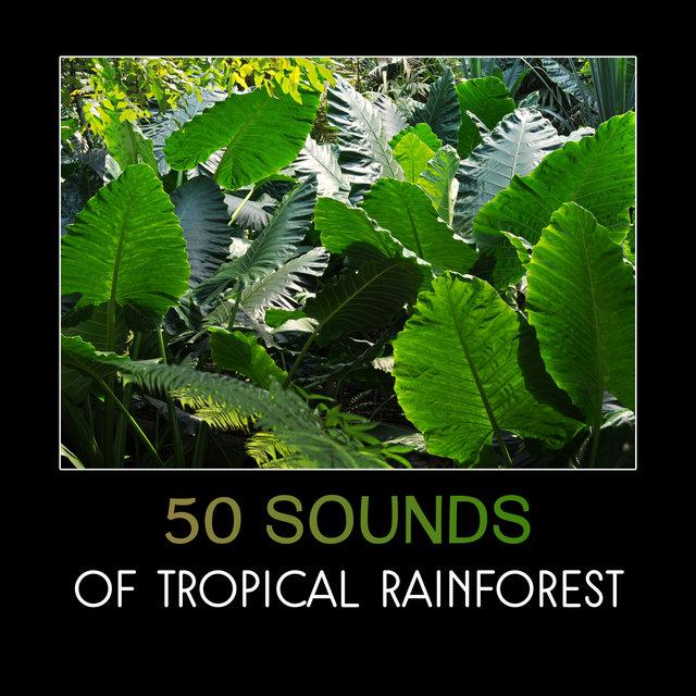 50 Sounds of Tropical Rainforest – Jungle Sounds, Birdsongs