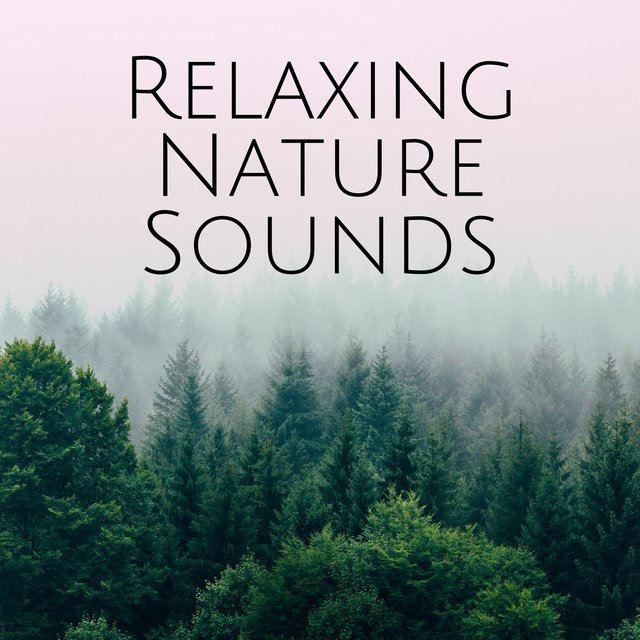 Listen to Relaxing Nature Sounds: Relaxation Study Time