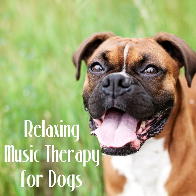 Listen to Relaxing Music Therapy for Dogs – Mellow Sounds to Calm