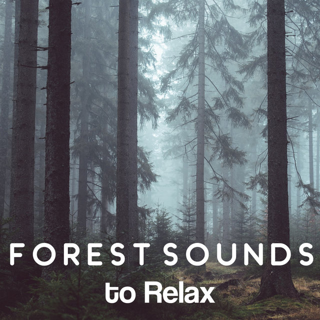 Forest Sounds to Relax – Nature Relaxation, Rain Sounds
