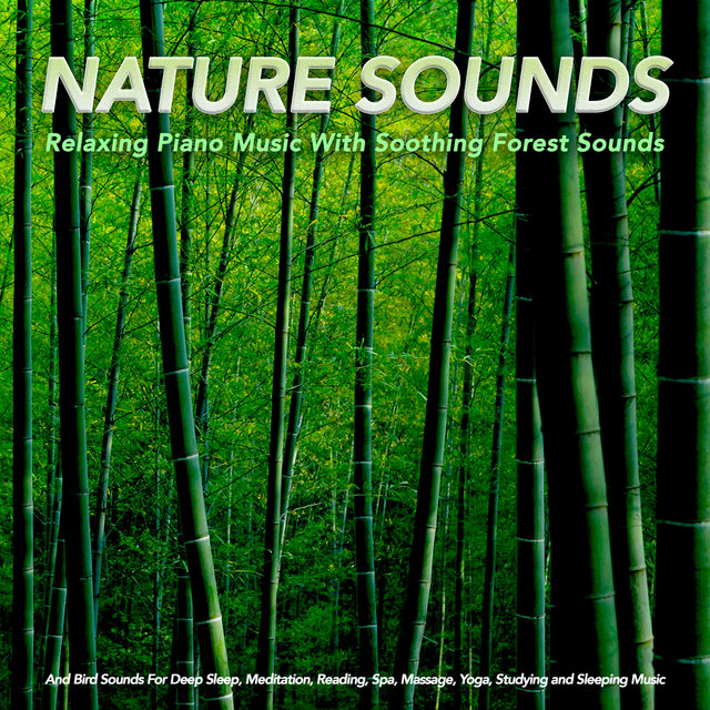 Nature Sounds: Relaxing Piano Music With Soothing Forest