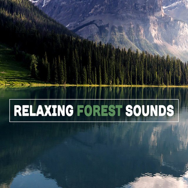 Listen to Relaxing Forest Sounds – Nature Music to Rest, Easy