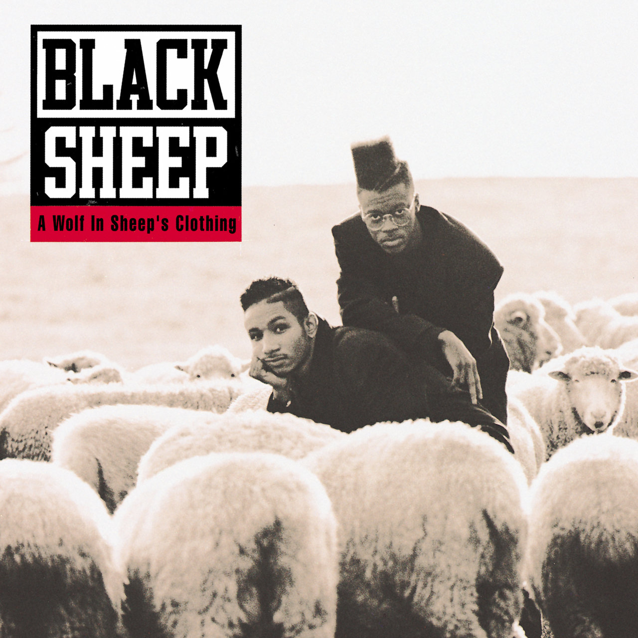 Image result for Black Sheep: A Wolf in Sheep's Clothing