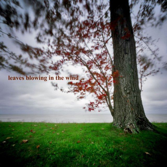 Listen to Leaves Blowing in the Wind by Nature Sounds from