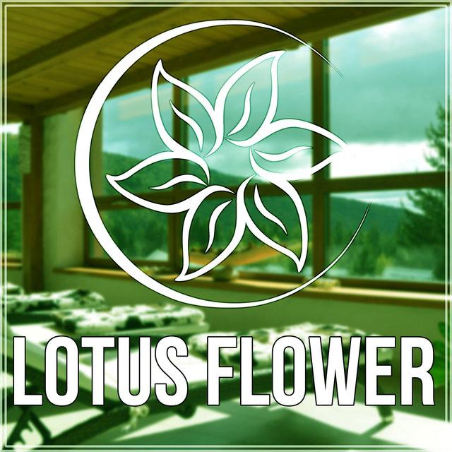 Listen To Lotus Flower Healing Meditation Sleep Massage Therapy