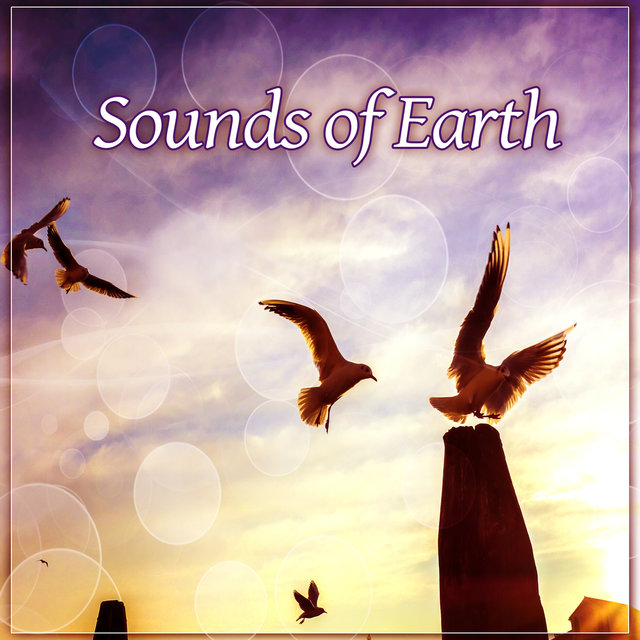 Sounds of Earth – Rainfall, Jungle, Animals, Planet, Closely