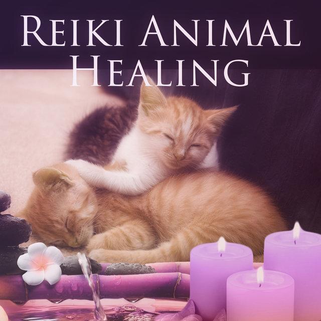 Reiki Animal Healing – Soothing Music for Pet Spa Massage