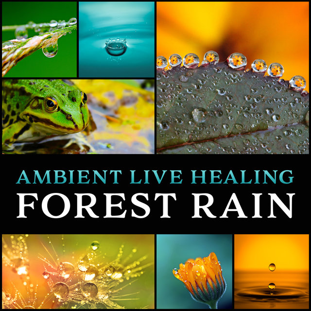 Ambient Live Healing Forest Rain: Soothing Sounds of Rain for Rest