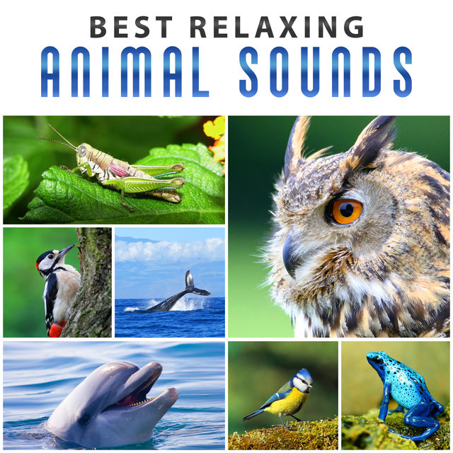 Healing Rain with Morning Birds – Prayer by Natural Sounds