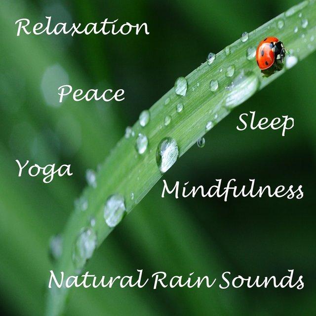 6 Calming Rainforest Noises, Natural Wellbeing and Sleep Rain Tracks