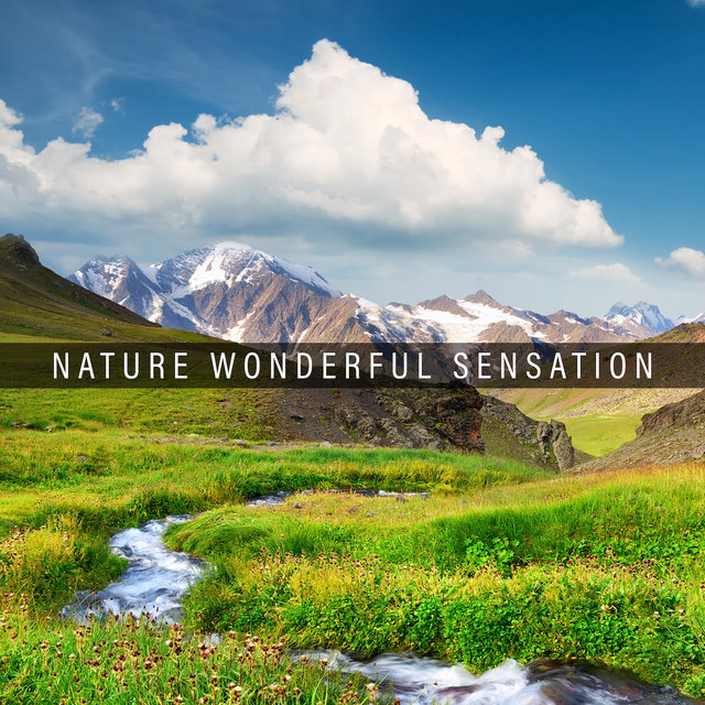 Nature Wonderful Sensation: 2019 Compilation of New Age Nature Music, Perfect Relaxation Sounds, Soothing Piano Melodies