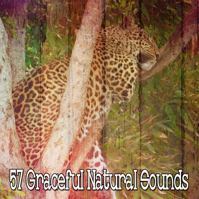 57 Graceful Natural Sounds