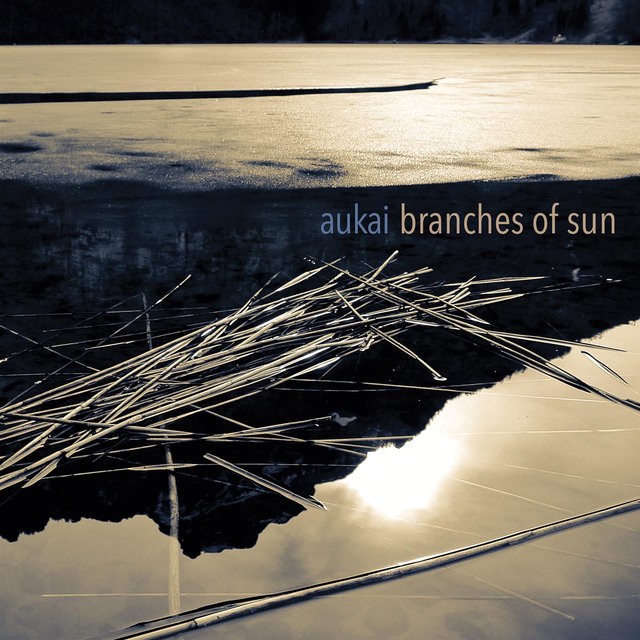 Branches of Sun