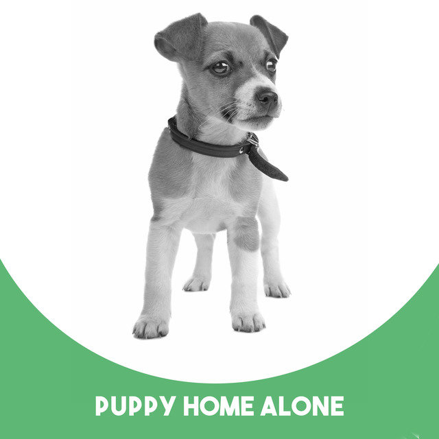 Puppy Home Alone