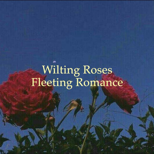 Wilting Roses, Fleeting Romance