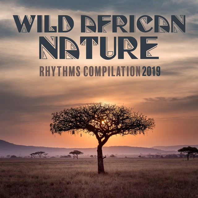 Wild African Nature Rhythms Compilation 2019