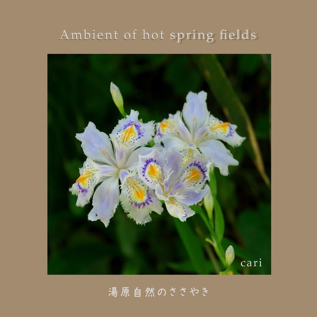 Ambient of Hot Spring Fields