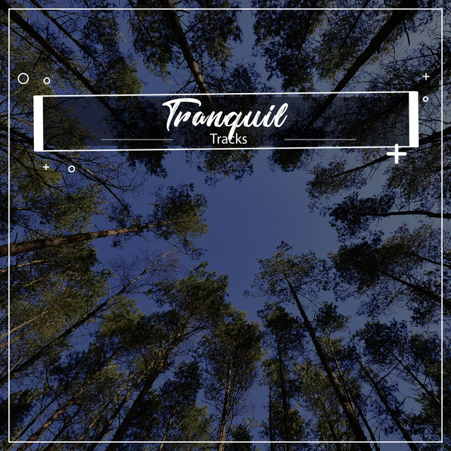 #5 Tranquil Tracks for Meditation and Sleep