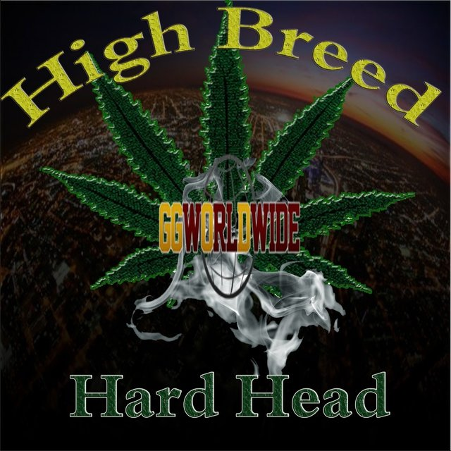 High Breed