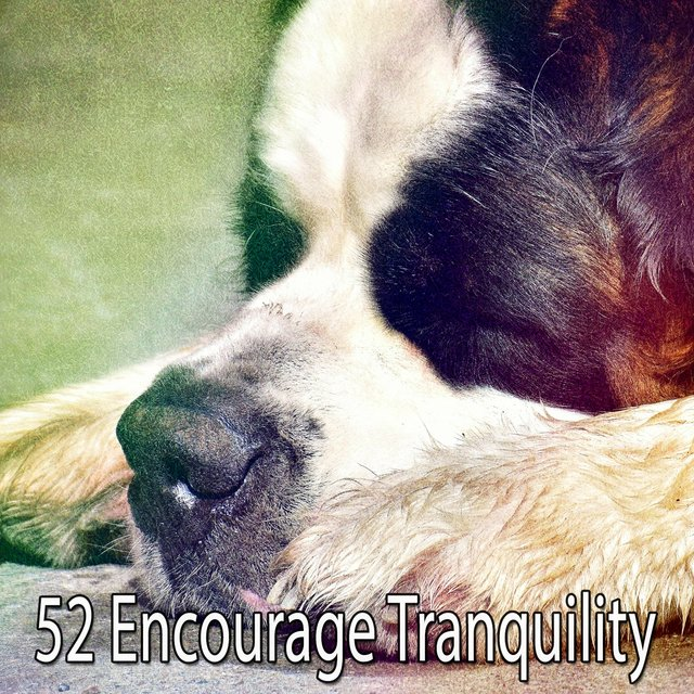 52 Encourage Tranquility