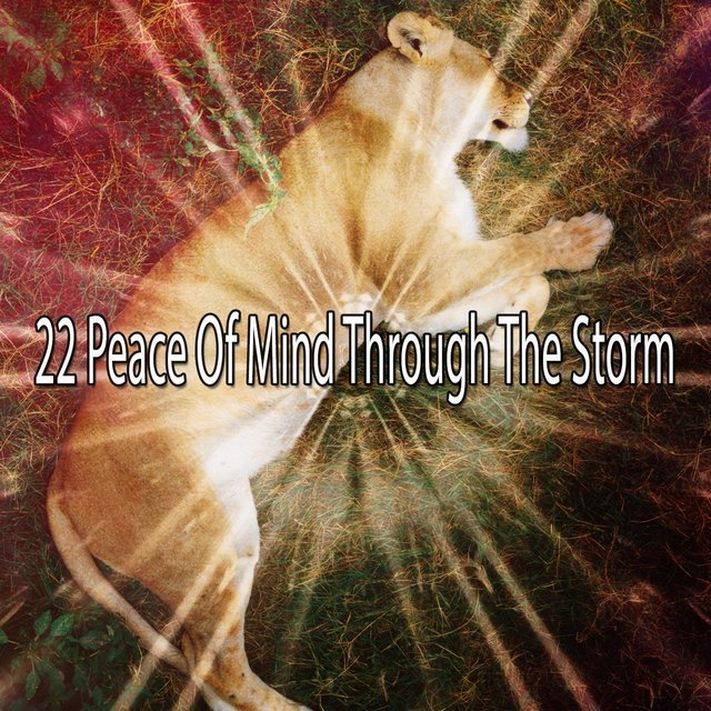 22 Peace of Mind Through the Storm