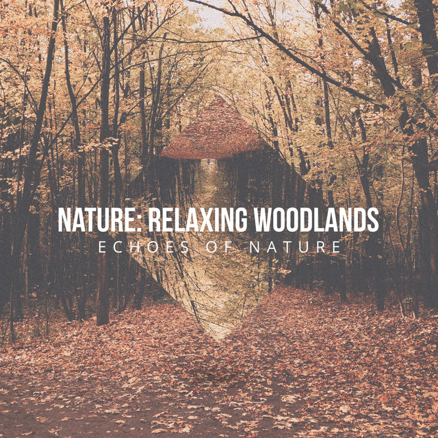 Nature: Relaxing Woodlands