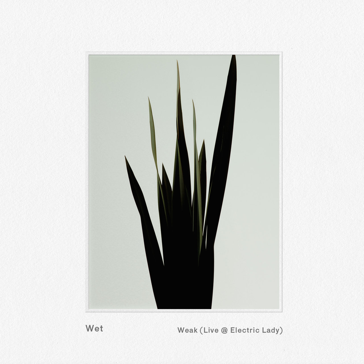 Weak (Live @ Electric Lady)