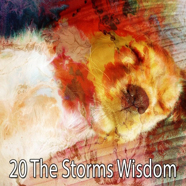 20 The Storms Wisdom